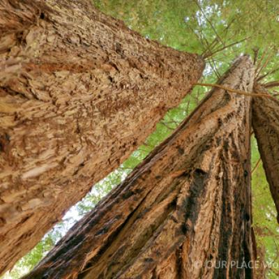 Redwood National and State Parks   World Heritage Outlook